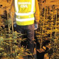 Encuentran 277 plantas de cannabis en su casa tras provocar un apagón en una calle de Las Gabias