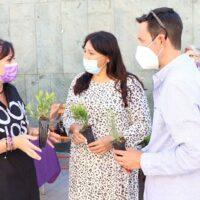 Podemos pide la repoblación de los alcorques vacíos en la vía pública de Maracena